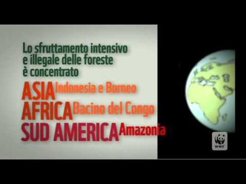 Wwf – Storia di una foresta. Video per le scuole. Script/testi Raethia Corsini