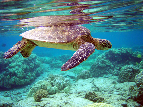 WWF – Tartarughe marine: come e perché salvarle. Testi Raethia Corsini